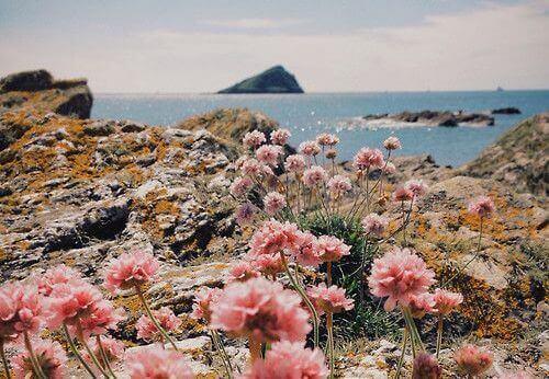 квіти та доброта