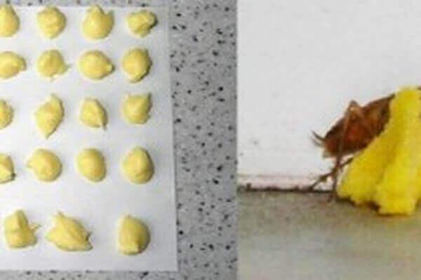 кульки з борною кислотою та жовтком яйця, щоб позбутися тарганів