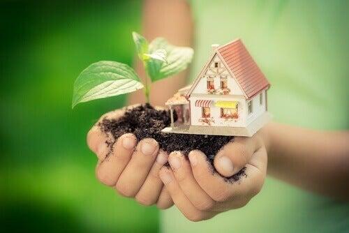 будинок і рослина
