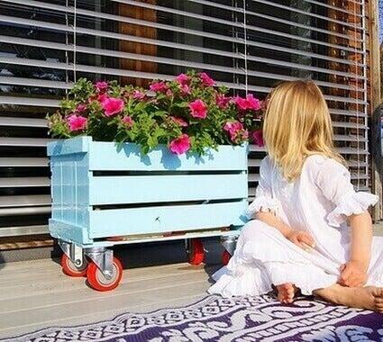 дівчинка дивиться на ящик з квітами
