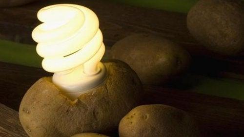 Дізнайтеся, як зробити картопляну лампу