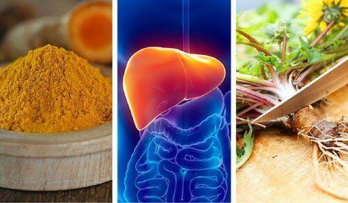 6 найкращих трав для захисту печінки