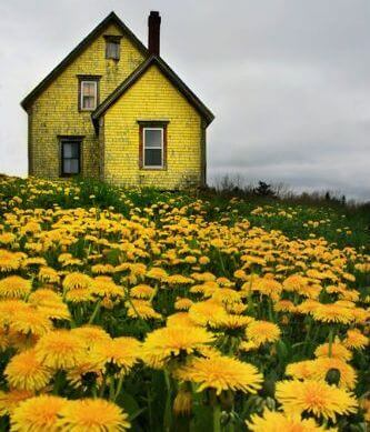 Жовтий будинок і кульбаби