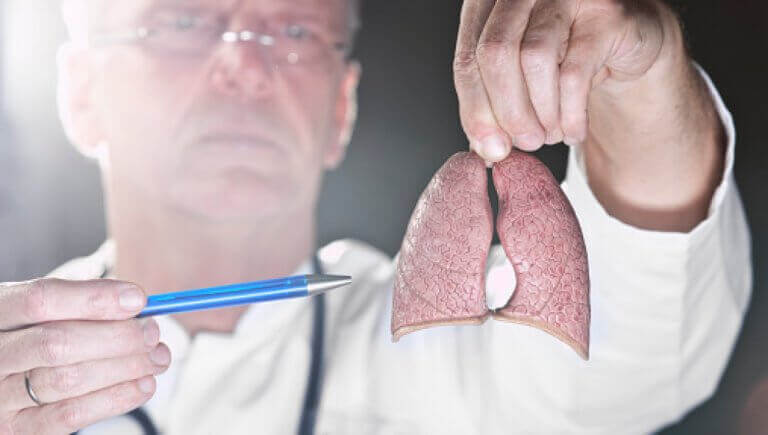лікар тримає легені в руках