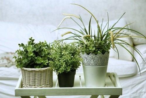 6 рослин, які ідеально підійдуть вашій кімнаті