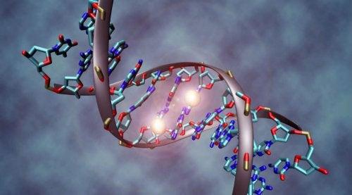 1-rakovi-geny