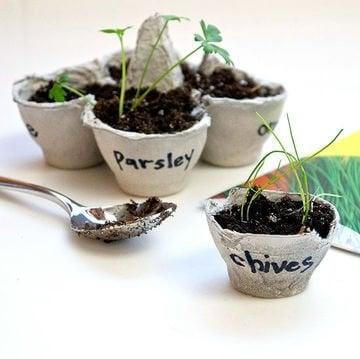 коробки від яєць можна використати як горщики для насіння