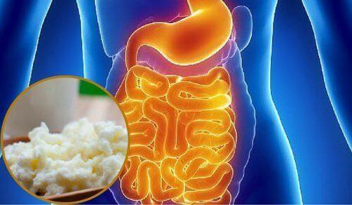 Природні засоби для відновлення мікрофлори кишечника