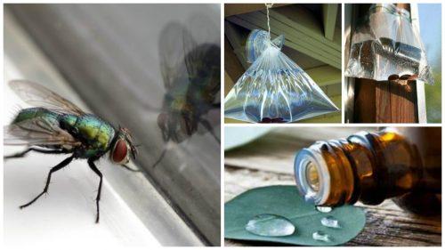 7 способів боротьби з мухами вдома