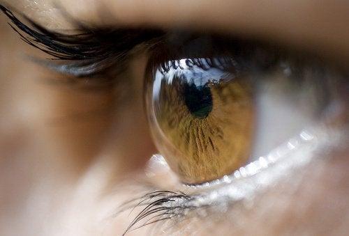 8 ефективних засобів для лікування ячменю на оці