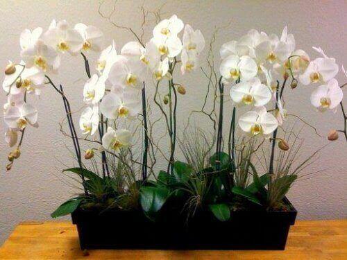 орхідеї очищують повітря в домі