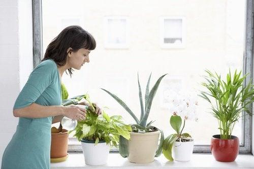 8 рослин, які очищують повітря в домі
