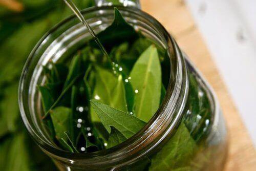 Неймовірні властивості олії лаврового листя