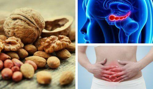 7 переваг волоських горіхів, про які ви не знали