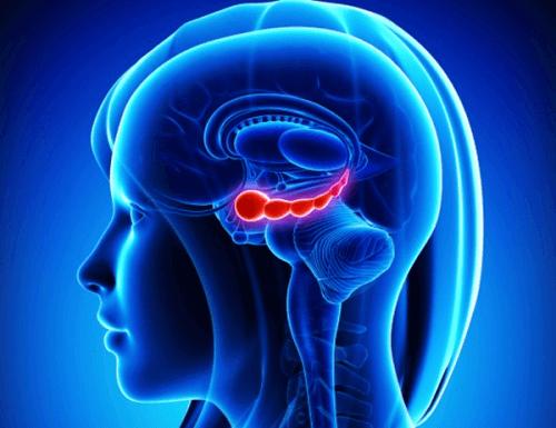 мозок