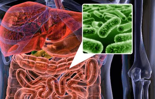 бактерії, що викликають гази