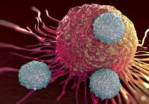 імунна система