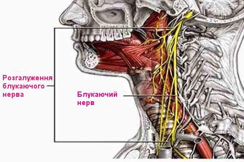 блукаючий нерв схема