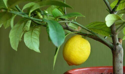 маски з алое вера і лимоном