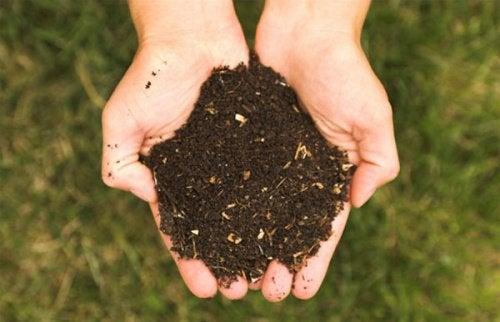 нова харчова піраміда та довкілля