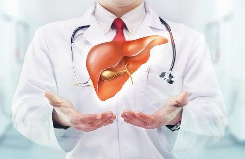 печінка - важливий орган