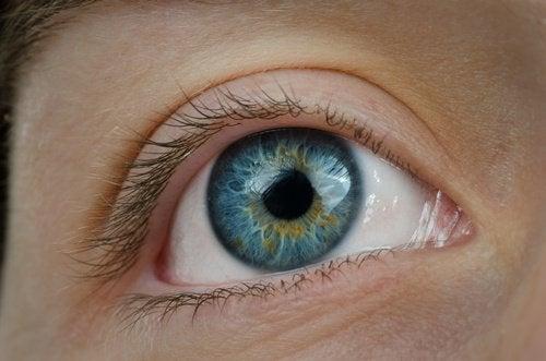 голубе око