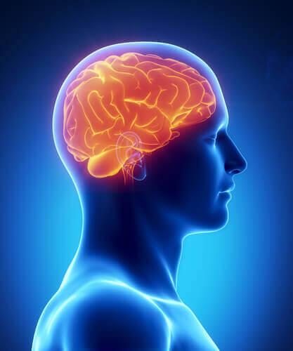 8 продуктів для покращення роботи мозку
