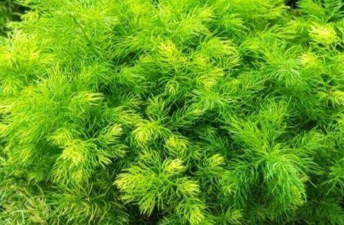 трави допоможуть покращити лібідо