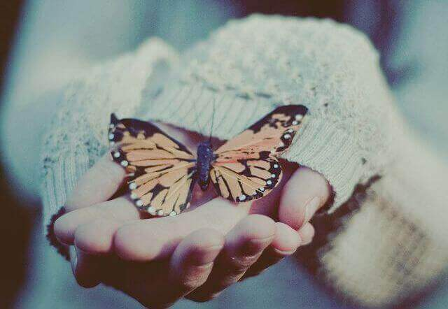 метелик на руці