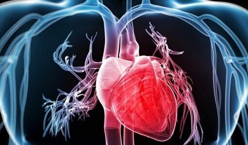 цукрове яблуко корисне для серця