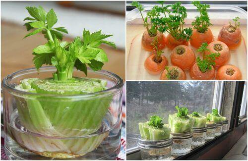 5 овочів, які можна виростити у домашніх умовах
