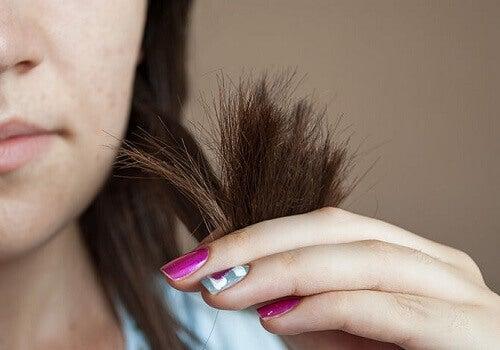 живлення волосся
