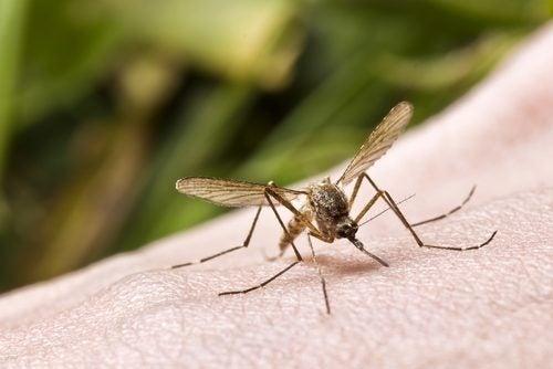 мазь від укусів комарів