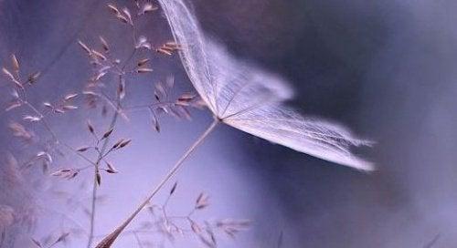 дихальні техніки і медитація