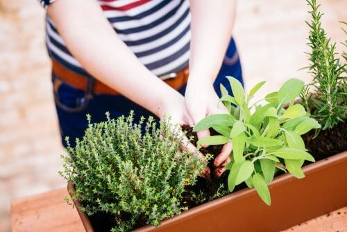 як власноруч створити міні-сад у квартирі