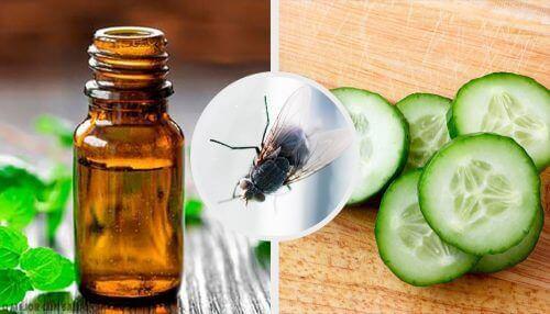 Як позбутися мух: 7 натуральних репелентів