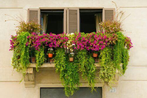 створення міні-саду на балконі