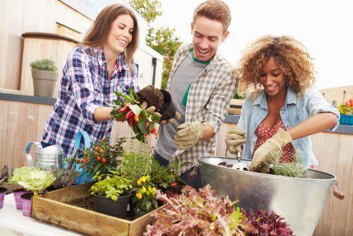 як перетворити садівництво на хобі