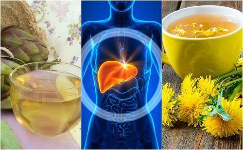 5 трав'яних напоїв для профілактики жирової дистрофії печінки