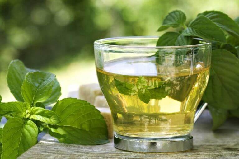 зелені чаї з м'ятою