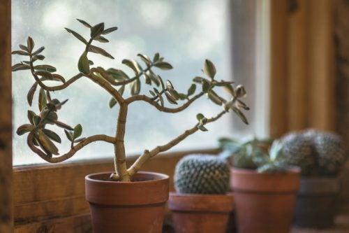 7 причин вирощувати домашні рослини