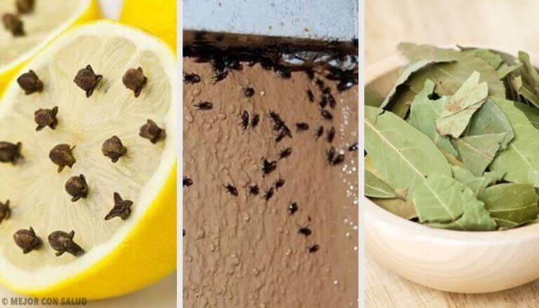 Як позбутися набридливих комах