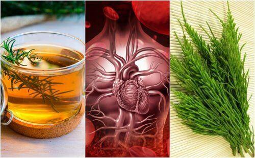 5 рослинних засобів, щоб покращити кровообіг
