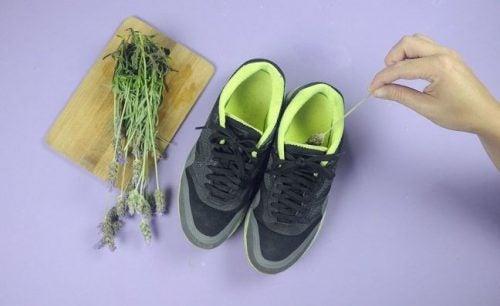лаванда допоможеуникнути запаху взуття