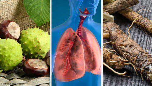 4 домашні засоби для покращення дихання і зміцнення легень