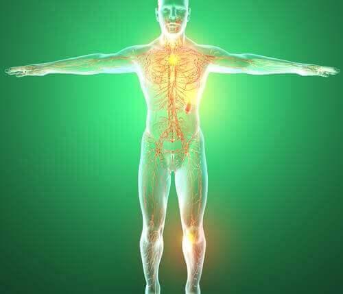 органи лімфатичної системи