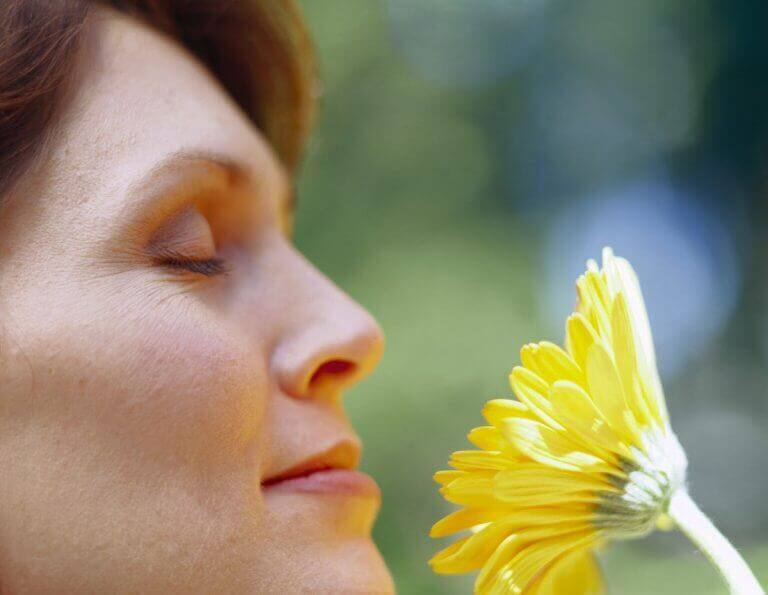 домашні рослини приносять щастя