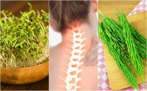 7 лікувальних рослин для покращення здоров'я кісток