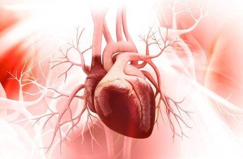 сочевиця покращує здоров'я серця