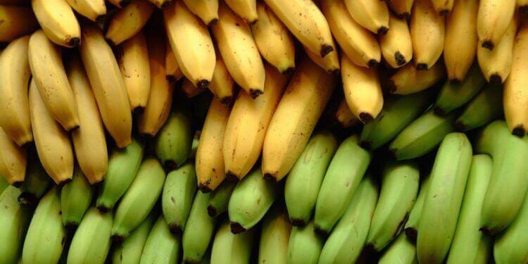 Банани та плантани: 3 харчові відмінності